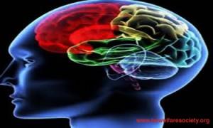 Addicted brain pic-02(Edited unique).