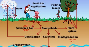 Food pollution and food toxicity.